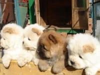 长沙官方认证宠物领养中心 现狗狗赠送中