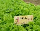 青岛绿色蔬菜采摘基地