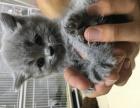 赛级名猫找新家 可到家选猫