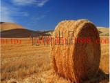 捆草网 (专业生产优质捆草塑料网)