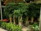 提供专业的室内植物租赁办公室绿化花木租摆零售批发