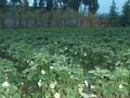 免费提供土地,倡导有机种植,共同关注健康饮食