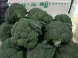 郑州蔬菜 箱