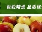 邯郸县陈三陵冬枣开始采摘了采摘园欢迎您