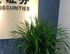花木公司 呼和浩特绿植公司 绿植租摆 绿植租赁公司