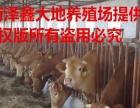 育肥种牛出售