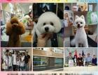 烟台宠物美容师班,山东爱尔宠物美容培训学校