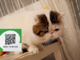 南阳在哪里卖健康纯种宠物猫 南阳哪里出售加菲猫