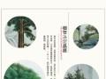 中式彩绘迎客松贵客接待室客厅装饰画移动背景墙隔断玄关定制屏风