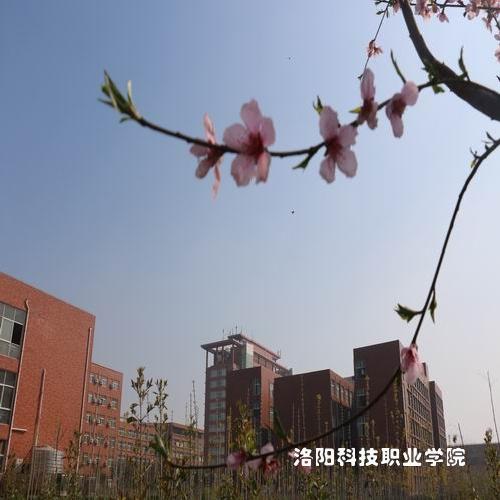 洛阳孟津县洛科国际金融学院学院荣誉