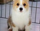 广州哪里买狗比较正规 广州哪里买狗比较靠谱