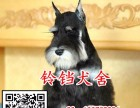 广州在哪里有卖纯种雪纳瑞犬 广州雪纳瑞犬一只大概多少钱