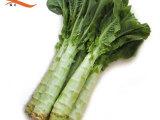 莴笋 基地直供 新鲜蔬菜