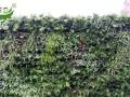 植物墙生产厂家,生态景观植物墙加盟 其