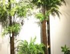 氧气森林 桫椤树软装搭配仿真蕨树橱窗造景客厅绿植盆栽拍照道具