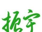 紫花三叉白芨瓶苗、霍山米斛、霍山石斛 瓶苗/组培苗