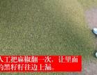 2019正宗重庆江津先锋花椒 新货 批发零售