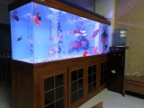 上海里賣魚缸上海里賣觀賞魚上海水族館上海賣冷水魚的地方