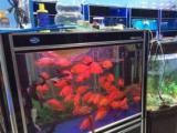 魚缸搬家清洗魚缸治魚病包月養魚魚缸造景