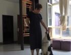 吉诺宠物培训学校狗狗训练、寄养