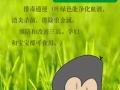 铭泰庄园(大麦诺叶青汁)