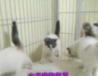 一手批发户长期收猫 寻全国批发商宠物店合作