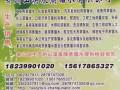 电瓶用蒸馏水郑州新品报价l823990l020