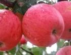 成都水果批發配送 種類齊全價格合理 貨員穩定