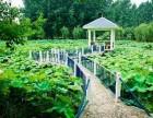 合肥一水香绿色文化庄园拓展培训基地对外承包转租