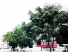 柳州展维热工科技有限公司加盟 工程机械
