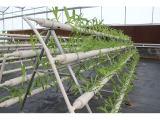 信誉好的无土栽培基质厂商,无土栽培工程
