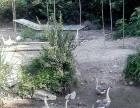 鄂州市梁子湖区太和镇 土地 78000平方平米