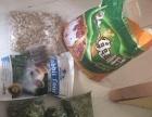 荷兰猪兔子粮食草半卖半送