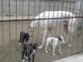 肉狗养殖加盟基地