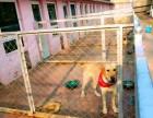 学院路宠物猫狗寄养 常年代养老年宠物 单间寄养入住 可接