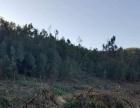 楚雄市紫溪山正门7公里 土地 42000平米