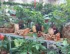 各种生日花束预定 开业花篮 绿植租摆 绿植盆栽