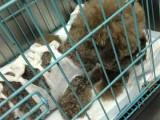 狗狗意外吞食异物怎么办 杭州专业宠物医院来帮你