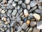 供应各种规格鹅卵石 可用于滤料 变压器 园林景观