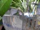 蚊虫特性,蚊子的危害,洛阳杀虫公司