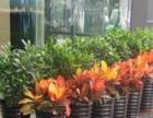 绿植租摆,租花售花,办公室用花,绿植租赁 花卉出售