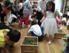 苏州DIY一米菜园 绿植DIY 菜园种植种菜活动