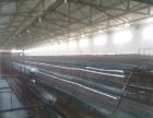 老城 向阳办瓦塔村 鸡舍 可容纳12000鸡