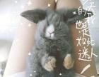 垂耳兔弟弟三个月