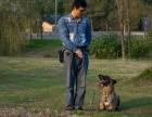 无锡江阴宠物训练训狗训犬
