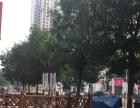 丰收路 奥北公元一期商业街 商业街卖场 6