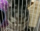 龙猫找个新家