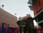 宁夏机械大象出租行走机械大象租赁展览