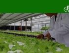 生态蔬菜加盟就选菜哆哆创业项目就选菜哆哆