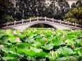 免费亲子活动 深圳洪湖公园周末赏荷花